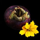 Mangosteen, Fruit of the Gods by Heather Friedman