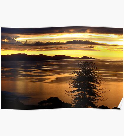 Rocky Cape National park at sunset , Tasmania , Australia Poster