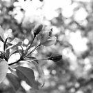Blooming Glass by heavenlywolfpup