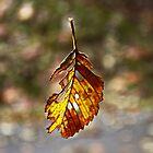 Falling Leaf by AnnDixon