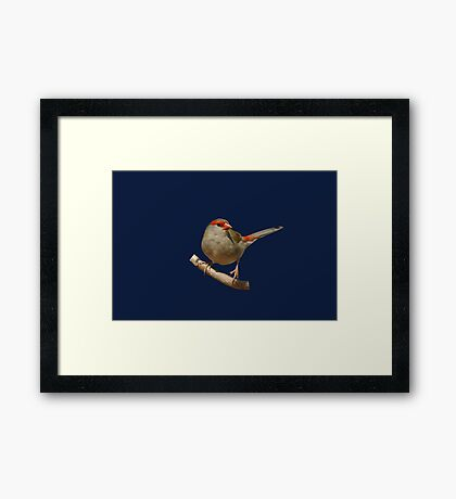 Red-browed Finch 2 Framed Print