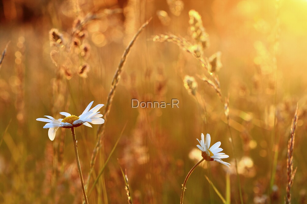 Evening Glow by Donna-R