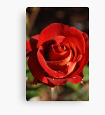 Rose--Ian Thorpe 2 Canvas Print