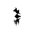 Cormorant with Blue Highlights by derbyshireduck