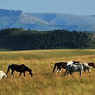 A Nice Day for Horses on the Rocky Mountain Front by Donna Ridgway