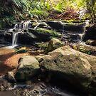 Stepping Cascade - Leura, Blue Mountains, Australia. by Danielasphotos