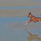 Dog frollicking at Ocean Beach California by milton ginos