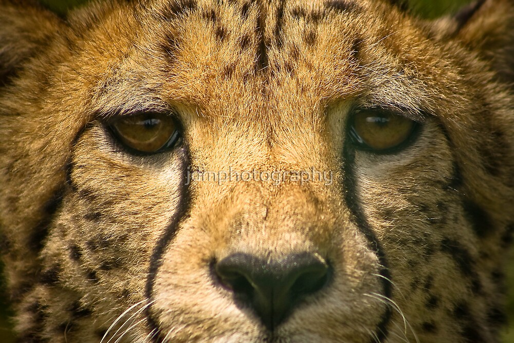 """""""EYE CONTACT"""" by jdmphotography"""