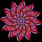Red White And Blue On Black Mandala  by Gypsykiss