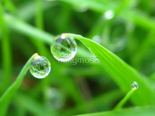 grass beads by millymuso