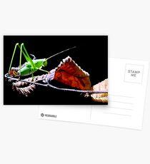 Katydid at Night Postcards