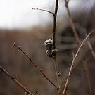 Critter? by DenverCool