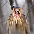 Grumpy Bittern? by lloydsjourney
