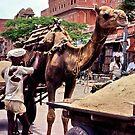 Beast of burden, Rajasthan by John Spies