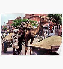Beast of burden, Rajasthan Poster