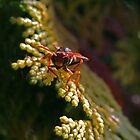 Black & orange wasp by Rick Fin