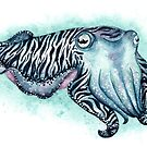 Cuttlefish Watercolor by Denise Soden