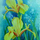 Yellow Iris by Teresa Boston