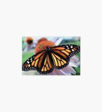Monarch Butterfly on Purple Coneflower Art Board