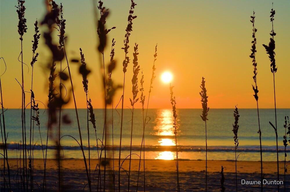 Perfectly Peaceful by ©Dawne M. Dunton