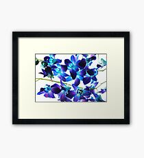 Purple Orchids on White Framed Print