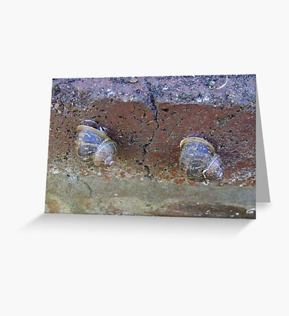 2 snails on wall Greeting Card