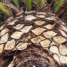 Palm Patterns in California by Heather Friedman
