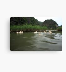 Ducks on the move Canvas Print