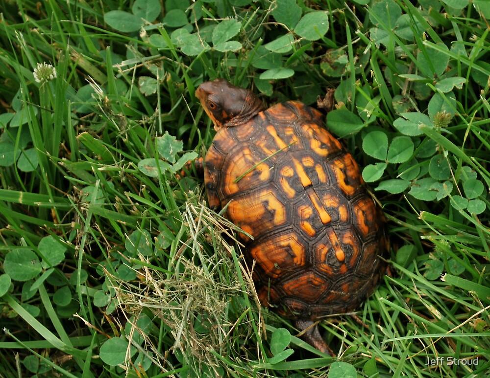 Little turtle  by Jeff stroud