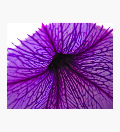 Purple Trumpet Photographic Print