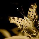 Monarch Butterfly by Fern Design