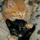 Kitten Love by ApeArt
