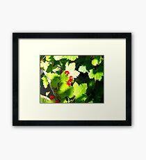 Redcurrant Bush Framed Print