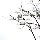 branches by twistwashere