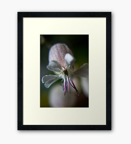 Like octopus (from wild flowers collection) Framed Print