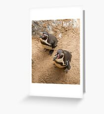 Penguin Couple Greeting Card