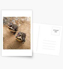 Penguin Couple Postcards