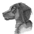 Field trial cocker spaniel by doggyshop