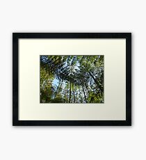 Tree fern in the Forest Framed Print