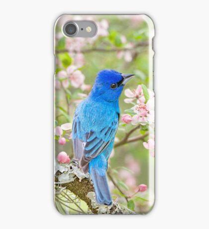 Indigo Bunting in Spring Time iPhone Case/Skin