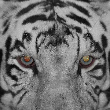 Tiger Eyes by Bobst1080