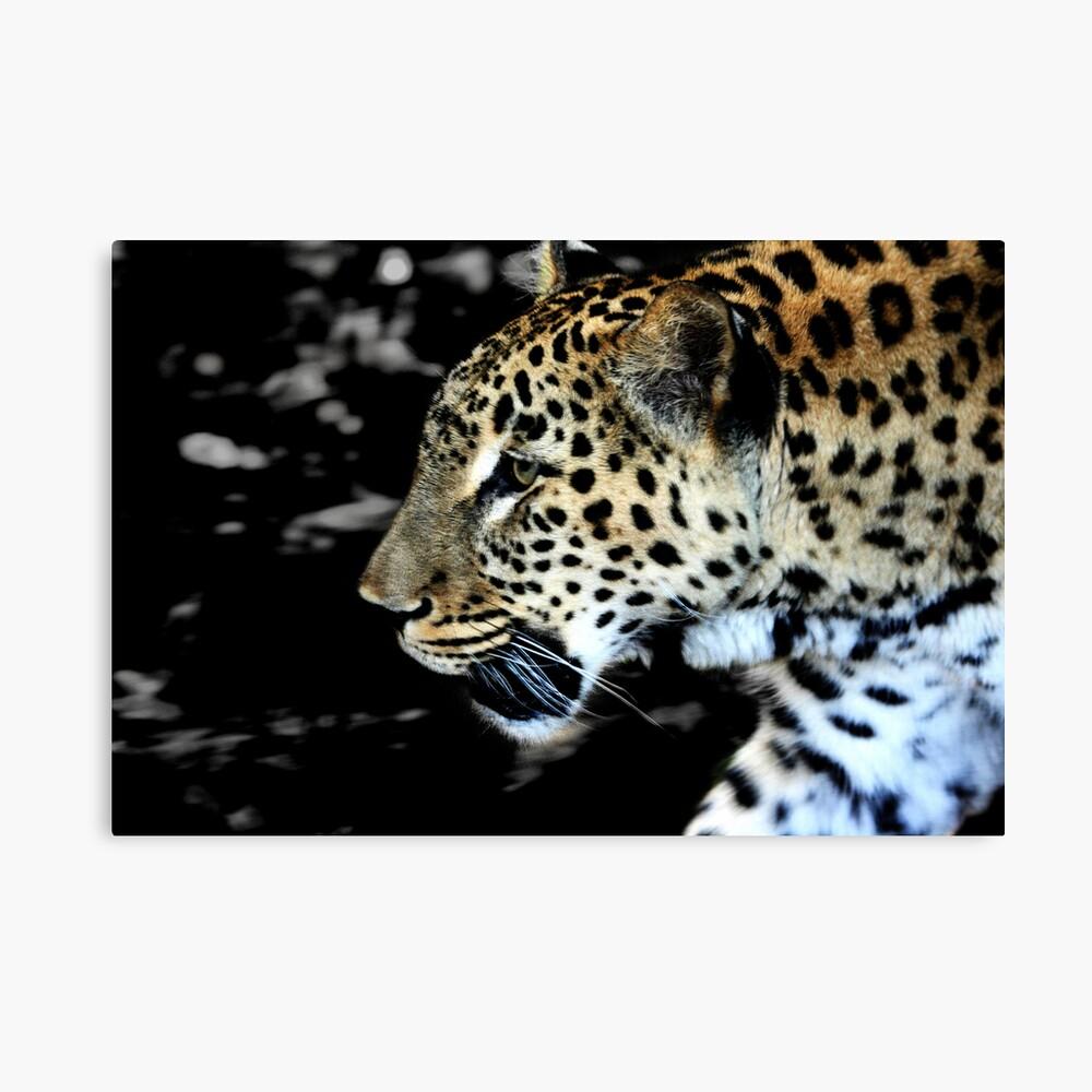 Persian Leopard Canvas Print