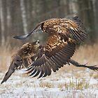 Mid-air encounter by Dominika Aniola