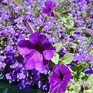 Purple Fantasy by BellaStarr