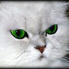 Green Eyed Lady by Jenni Atkins-Stair