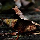 Ghosts of fallen leaves, by Photography  by Mathilde