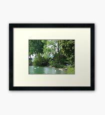 Swans, Lake: Zurich Framed Print