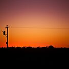 Electric Sunset by Irene Scales