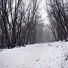 Winter's path by Pirostitch
