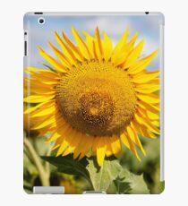 Sunflower - Nobby, Australia iPad Case/Skin